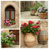 Multicolor hortensia plants in pots — Stock Photo