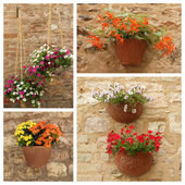 Flowerpots hanging on facade — Foto Stock