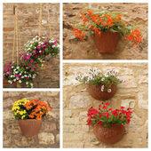 Flowerpots hanging on facade — Stock Photo