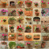 Wall made of images with flowers in pots — Stock Photo