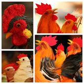 Easter rooster collection — Stock Photo
