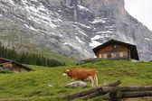On the Pasture — Stock Photo