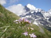 Mountain Flowers — Stock Photo