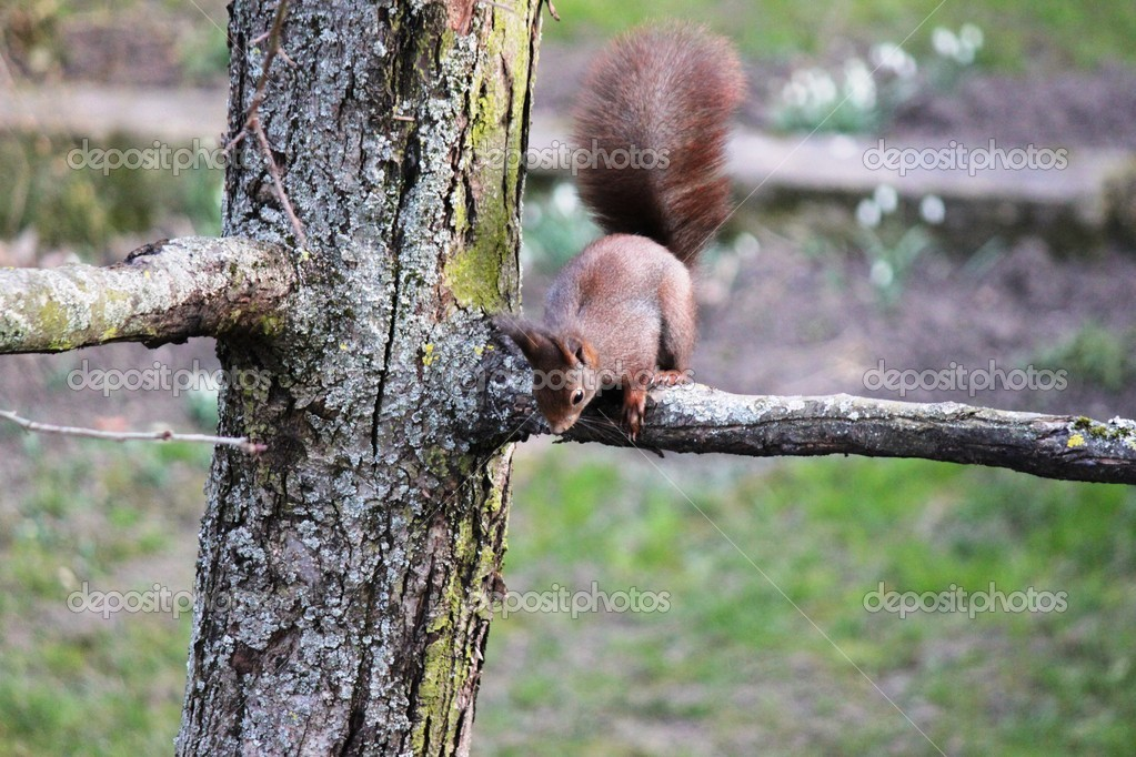 A squirrel climbs around on a tree — Stock Photo #21175711