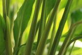 Leaf stalks — Stock Photo