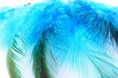 Blue feathers — Stock Photo