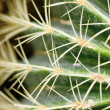 Spiny — Stock Photo #27245901