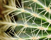 Spiny — Stock Photo