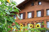Farm houses in Switzerland — Stock Photo