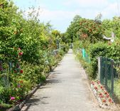 Rose path in the garden — Stock Photo