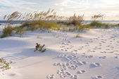 Footprints in the Dunes — Stock Photo