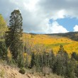Golden Aspens and Tall Pines in Santa Fe National Forest — Stock Photo