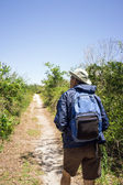 Man Hiking on a Path in a national park — Stock Photo