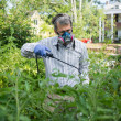 Man Spraying His Insect Infested Tomato Plants — Stock Photo #26702323