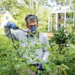 Man Spraying His Insect Infested Tomato Plants — Stock Photo