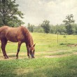 Chestnut Horse in Peaceful Pasture — Stock Photo