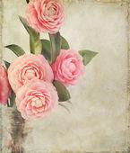 Flores de camelia femenino con textura vintage — Foto de Stock