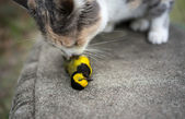 Calico Cat Sniffing recently killed Yellow Hooded Warbler Bird — Stock Photo