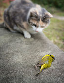Calico Cat with recently killed Yellow Hooded Warbler Bird — Stock Photo