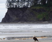 Eagle on beach — Stock Photo