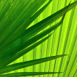 Palm — Stock Photo