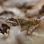 Frog — Stock Photo #44506579