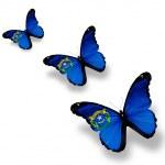 Three Nevada flag butterflies, isolated on white — Stock Photo #10365199