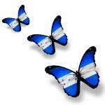 Three Honduras flag butterflies, isolated on white — Stock Photo #11979933