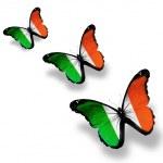 Three Irish flag butterflies, isolated on white — Stock Photo #12097488
