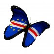 Cape Verde flag butterfly flying, isolated on white background — Stock Photo