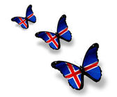 Three Icelandic flag butterflies, isolated on white — Stock Photo