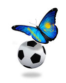Concept - butterfly with Kazakhstan flag flying near the ball, l — Стоковое фото