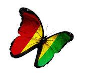 Guinee vlag vlinder vliegen, geïsoleerde op witte achtergrond — Stockfoto