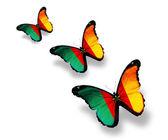 Tři motýly vlajka kamerunu, izolovaných na bílém — Stock fotografie
