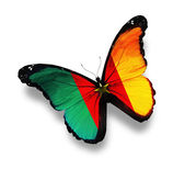 Cameroon flag butterfly, isolated on white — Stock Photo