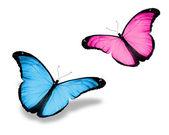Dos mariposa rosa azul, aislado en blanco — Foto de Stock