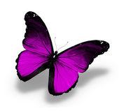 紫蝶,孤立在白色 — 图库照片