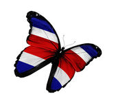 Costa Rica flag butterfly flying, isolated on white background — Stock Photo