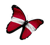 Latvian flag butterfly flying, isolated on white background — Stock Photo