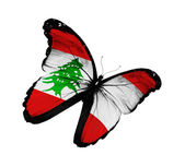 Lebanese flag butterfly flying, isolated on white background — Stock Photo