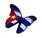 キューバの国旗蝶の飛行に孤立した白い背景 — ストック写真