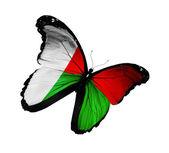 Motyl flaga madagaskaru latający na białym tle na białym tle — Zdjęcie stockowe