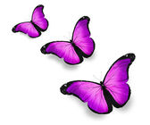 Three violet butterflies, isolated on white — Stockfoto