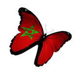 Moroccan flag butterfly flying, isolated on white background — Stock Photo