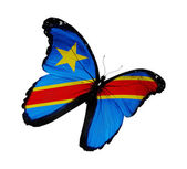 Democratic Republic of the Congo flag butterfly flying, isolated — Stock Photo