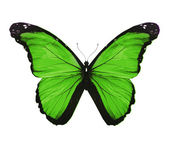 Morpho grön fjäril, isolerad på vit — Stockfoto