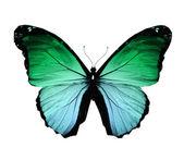 Zelené morpho motýl, izolované na bílém — Stock fotografie