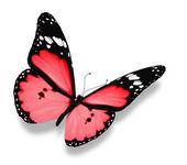 粉色蝴蝶,孤立在白色 — 图库照片