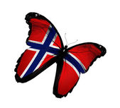 Norwegian flag butterfly flying, isolated on white background — Stock Photo