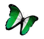 Nigeria vlag vlinder vliegen, geïsoleerde op witte achtergrond — Stockfoto